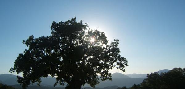 il-sole-contro.jpg
